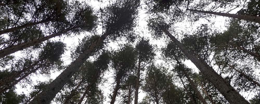 6-proy-ing-forestal-paisajismo